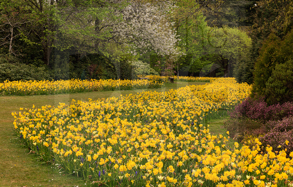 River of Gold, Exbury Gardens